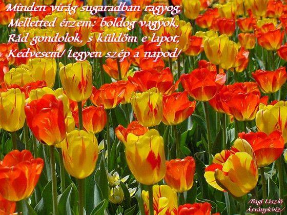 tulipános születésnapi képeslapok Verses képeslapküldő   tulipan   Képeslapküldés tulipános születésnapi képeslapok